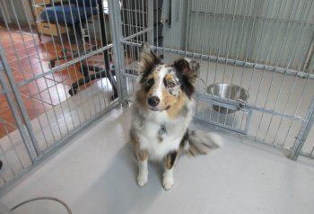 Hundesalon alt for hunden - før og efter Cody
