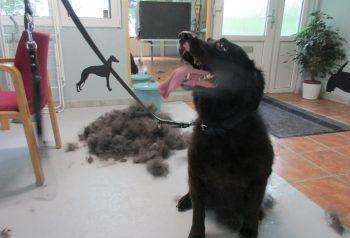 Hundesalon alt for hunden - før og efter Trunte
