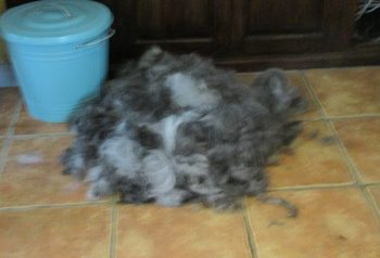 Hundesalon alt for hunden - før og efter Cooki