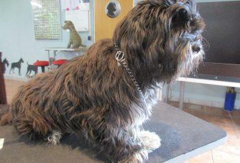 Hundesalon alt for hunden - før og efter Yes