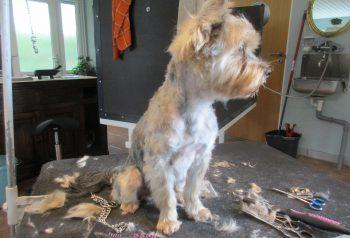 Hundesalon alt for hunden - før og efter Niko
