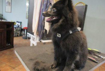 Hundesalon alt for hunden - før og efter Sander
