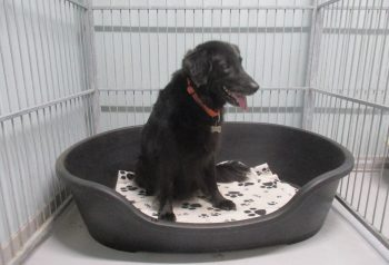 Hundesalon alt for hunden - før og efter Bell