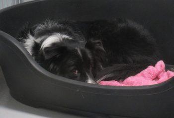Hundesalon alt for hunden - før og efter Max