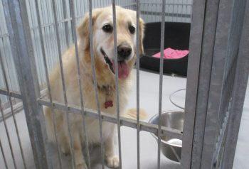 Hundesalon alt for hunden - før og efter Emma
