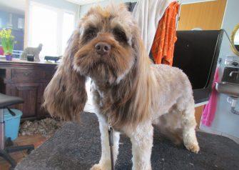 Hundesalon alt for hunden - før og efter Marly