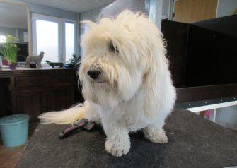 Hundesalon alt for hunden - før og efter Zippo