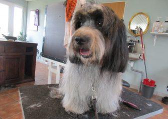 Hundesalon alt for hunden - før og efter Cika
