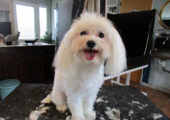 Hundesalon alt for hunden - før og efter Konrad