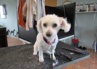 Hundesalon alt for hunden - før og efter Liva