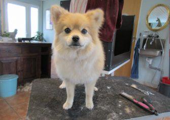 Hundesalon alt for hunden - før og efter Trunde
