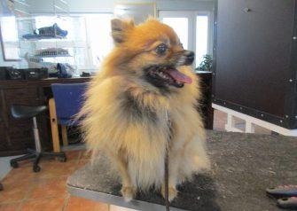 Hundesalon alt for hunden - før og efter Jami
