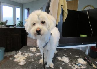 Hundesalon alt for hunden - før og efter Anna