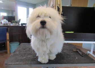 Hundesalon alt for hunden - før og efter Elmer
