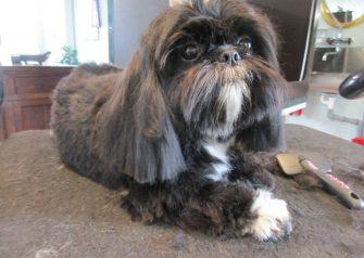 Hundesalon alt for hunden - før og efter Odin