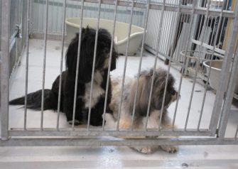 Hundesalon alt for hunden - før og efter Aslan & Odin hygger