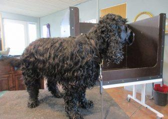 Hundesalon alt for hunden - før og efter Luka
