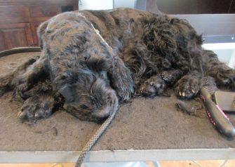 Hundesalon alt for hunden - -luka tager det afslappet