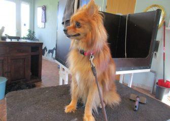 Hundesalon alt for hunden -Zimba