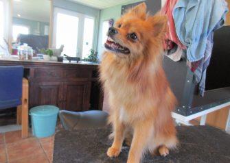 Hundesalon alt for hunden - Zimba