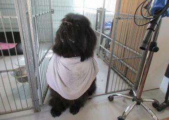 Hundesalon alt for hunden -Buller