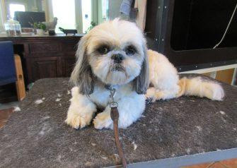 Hundesalon alt for hunden - Milo