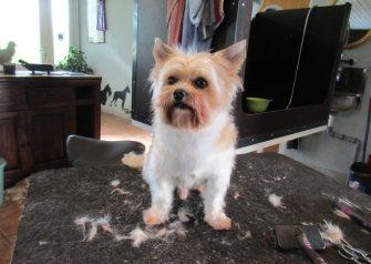 Hundesalon alt for hunden - Balder