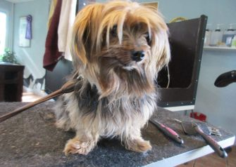 Hundesalon alt for hunden - Bølle