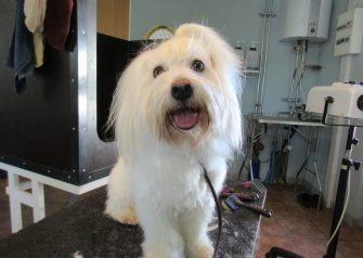 Hundesalon alt for hunden - Marley