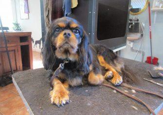Hundesalon alt for hunden - Cheila