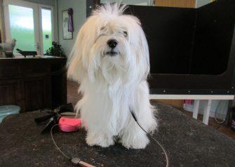 Hundesalon alt for hunden - Phipi