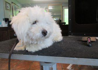 Hundesalon alt for hunden - Alba