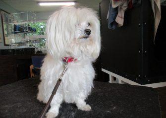 Hundesalon alt for hunden - Silver