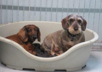 Hundesalon alt for hunden - Elvis og Mitte er blevet sommerklippet
