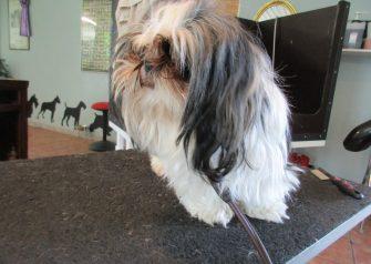 Hundesalon alt for hunden - Sille