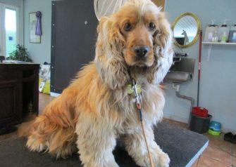 Hundesalon alt for hunden - Milla