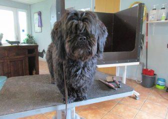 Hundesalon alt for hunden - Bazzi