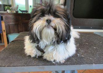 Hundesalon alt for hunden - Felix