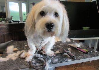 Hundesalon alt for hunden - Albert