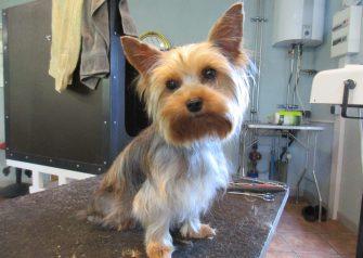 Hundesalon alt for hunden - Mia