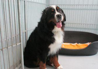 Hundesalon alt for hunden - Gizmo