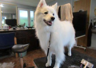 Hundesalon alt for hunden - Jablo
