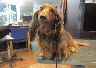 Hundesalon alt for hunden - Nuga