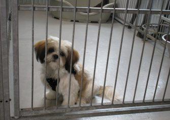 Hundesalon alt for hunden - Simba
