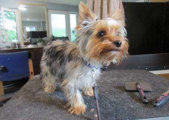 Hundesalon alt for hunden - Minni