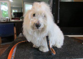 Hundesalon alt for hunden - Tular