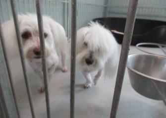 Hundesalon alt for hunden - Tular & Viktor