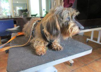 Hundesalon alt for hunden - Ras