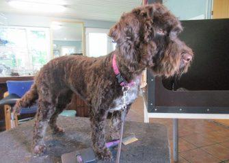 Hundesalon alt for hunden - Liva