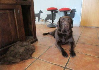 Hundesalon alt for hunden - Fie